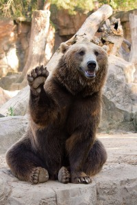 They should have gone with a Ring Bear-er